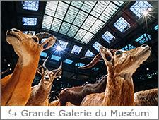 http://www.laurentbessol-photographies.fr/p/grande-galerie-du-museum.html