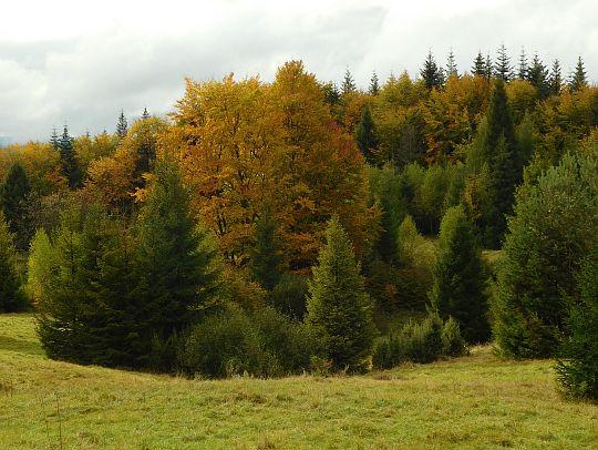 Mieszanka drzew nowych.