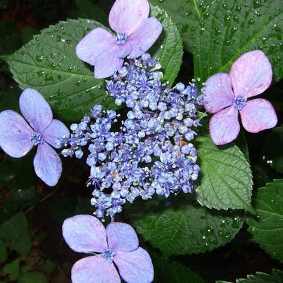 6月の花を撮ってみました