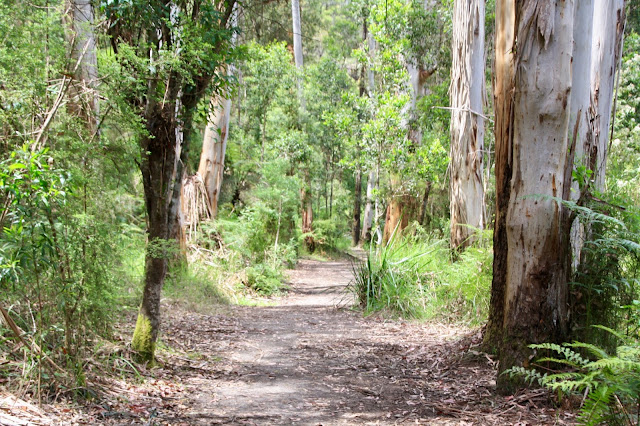 forest walking track
