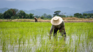 U.S launches $2m partnership programme to boost farmers' access to farm inputs 2