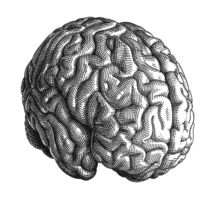 Brain vector ai