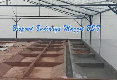 Biopond BSF model semen