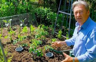 Alan Titchmarsh tomatoes