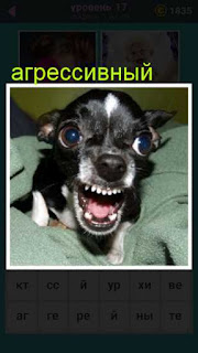 агрессивный щенок открыл свою пасть и показывает зубы 667 слов 17 уровень