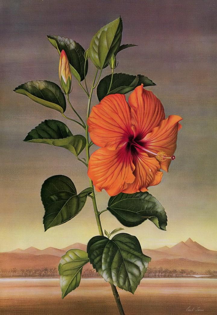 Paul Jones. Акварельные рисунки цветов 23