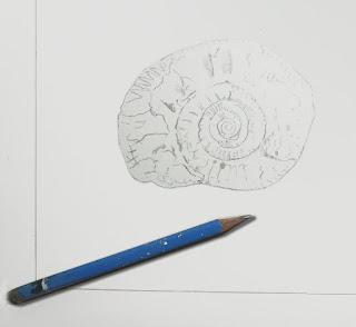 Premiers traits du dessin d'une ammonite