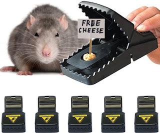 Muizenvallen
