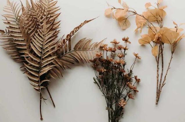 сушка листьев папоротника