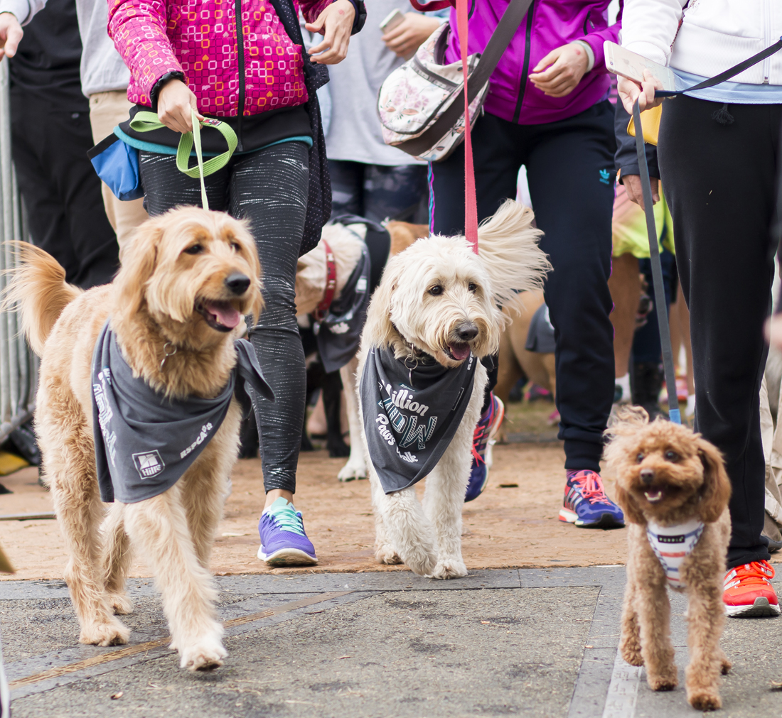 RSPCA Million Paws Walk 2015 - Dogs walking at Olympic Park