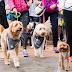 RSPCA Million Paws Walk 2016 - May 15