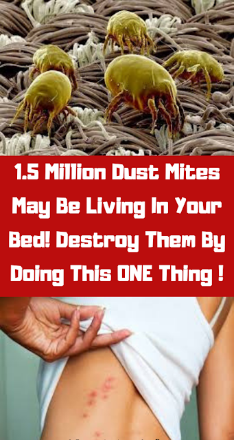 Did you know: millions of dust mites live in your bed. And you could kill them in a second!
