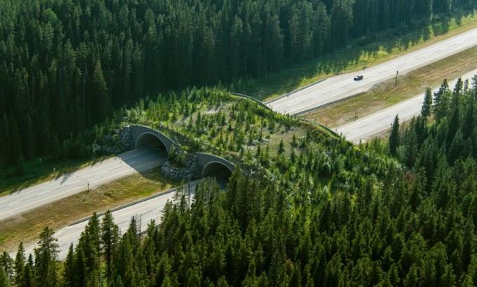 Οι γέφυρες που σώζουν εκατομμύρια ζώα από θάνατο - Τώρα και η Σουηδία υιοθετεί αυτή τη λύση