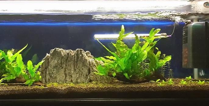 Planted Aquarium Filter