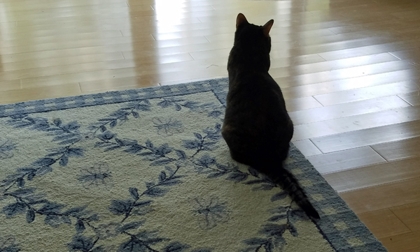 image of Sophie the Torbie Cat in silhouette, sitting on the edge of a rug, looking thoughtful