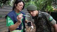 informasi virus zika - virus zika ditemukan di penampungan air minum