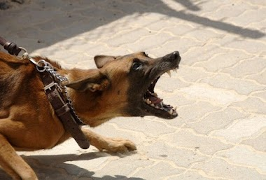 Criança é atacada por cachorro na zona rural de Petrolina (PE); dono do animal faz ameaças e culpa mãe da vítima.