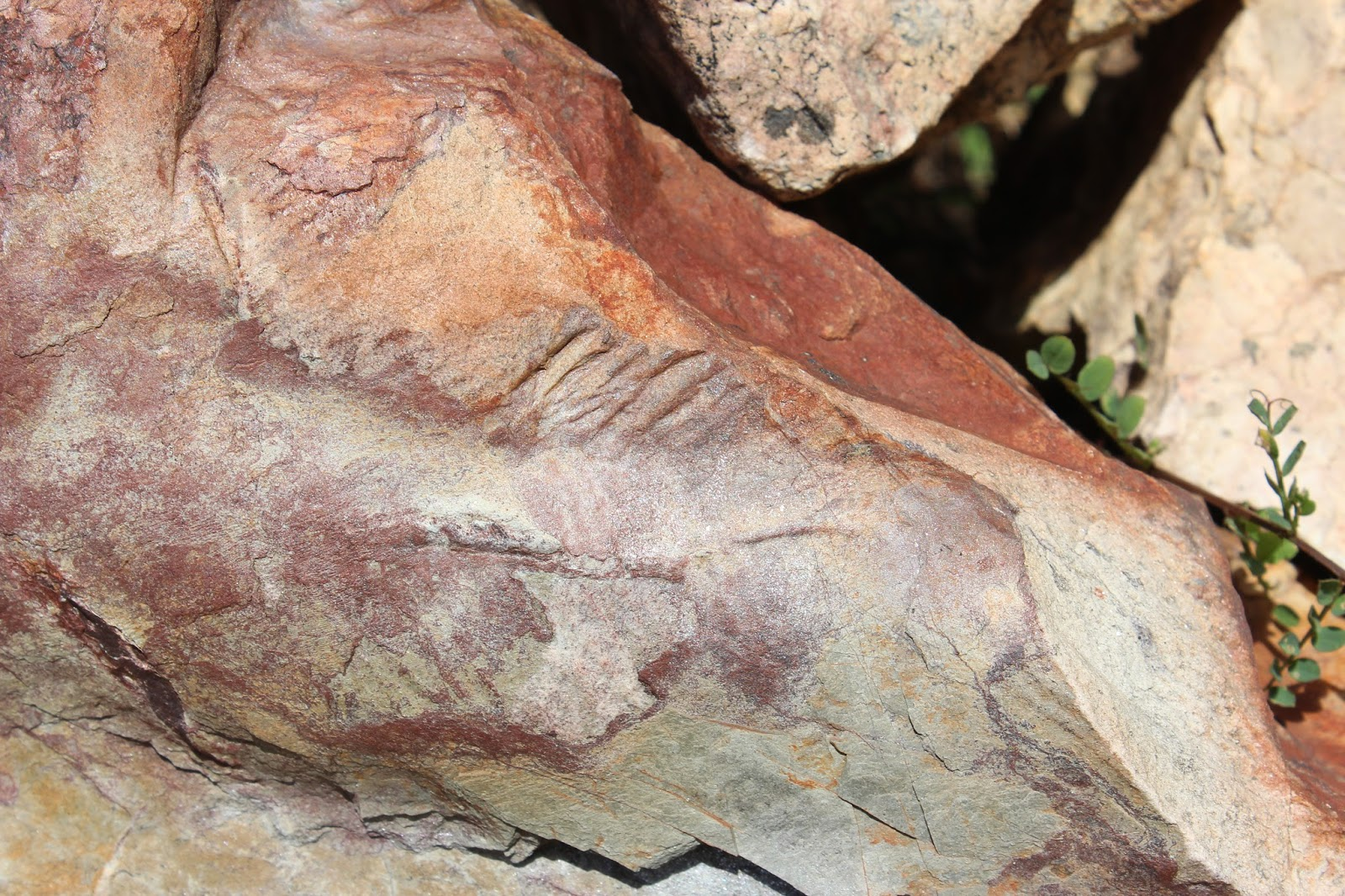 Fósiles en el jardín Botánico de Berzocana