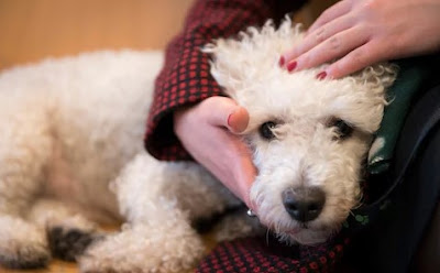 The Death of Staying Fit with Your Pet