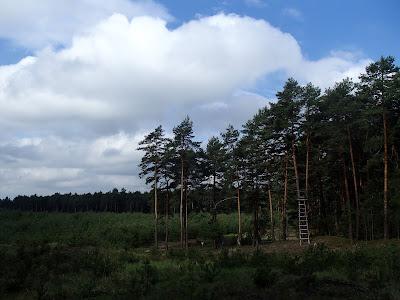 Park Krajobrazowy Orlich Gniazd, wiosenny las, grzyby wiosenne, grzyby w maju, śluzowce, samotek zmienny Reticularia lycoperdon, maślanka wiązkowa (łysiczka trująca) – Hypholoma fasciculare, piestrzenica kasztanowata Gyromitra esculenta
