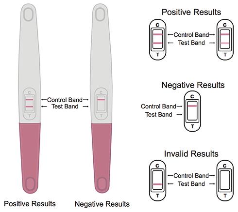 Jenis Pregnancy Test & Cara Guna Yang Betul