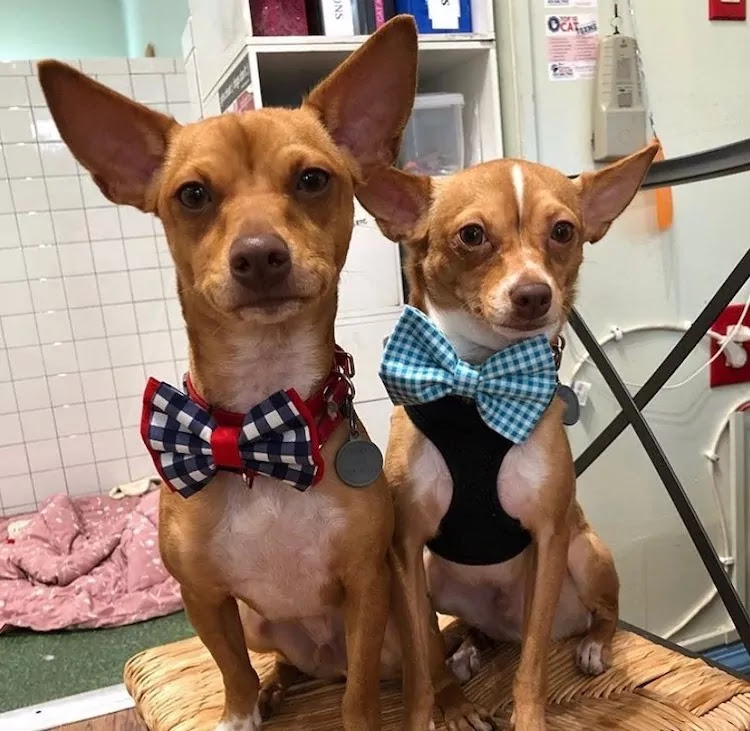 14-Year-Old Has Sewn Over 1,000 Bowties To Help Dogs Find Their Forever Home