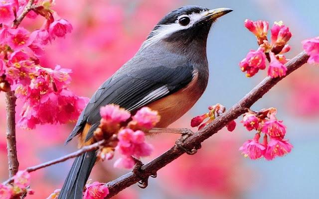تعريف الطيور