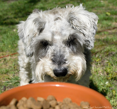 Dibble and Brothers Complete Lamb Meal & Egg Formula Dog Food