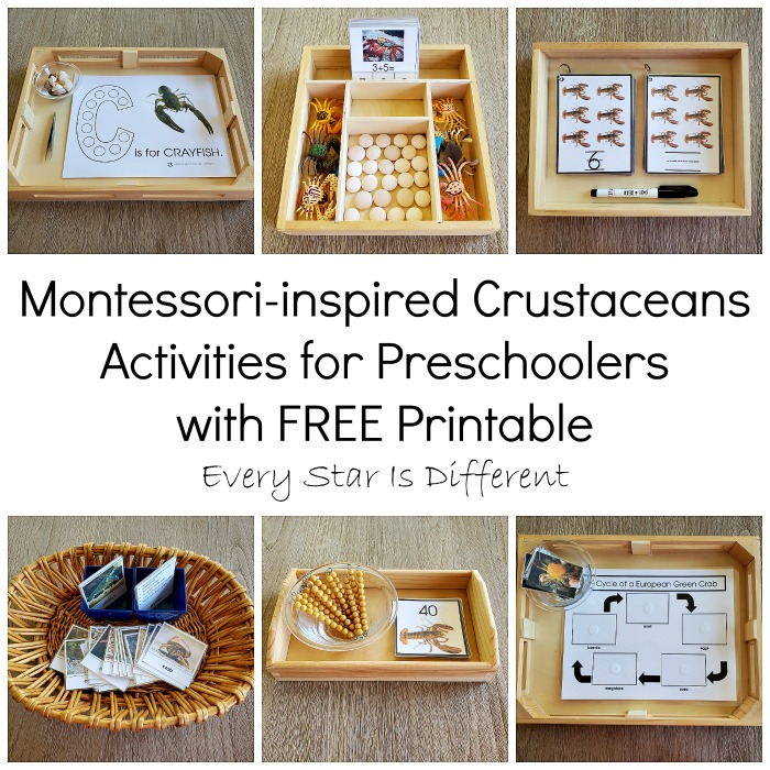 Montessori Crustacean Activities for Preschoolers