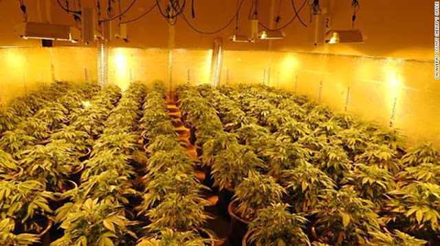 1,400 marijuana plants inside a building in Northern California