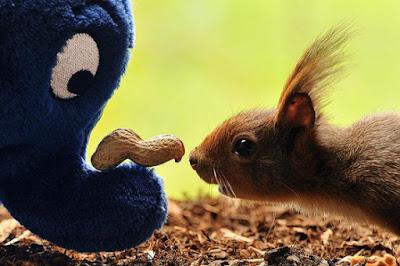 Simpatica imagen de ardilla y elefante de peluche