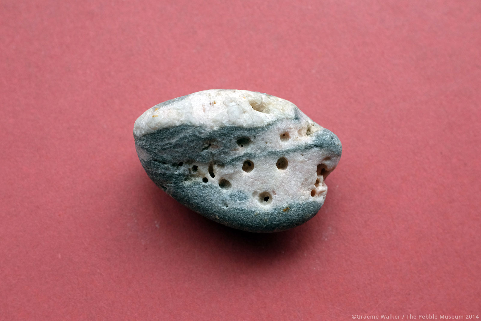 Grey and White Pebble with Holes © Graeme Walker / The Pebble Museum 2019