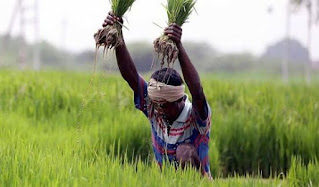 agriculture-bill-may-hold-sc