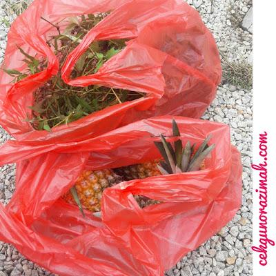 hasil kebun, nenas yenki, daun kesum