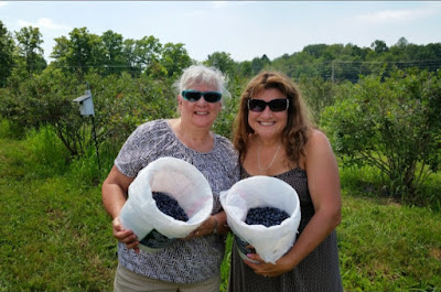 pick your own blueberries, blueberry picking, mom and daughter day