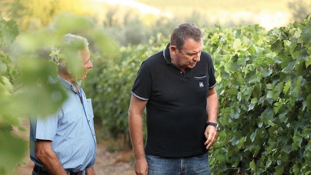 Καινούργιο ροζέ κρασί του Γιώργου Σκούρα - Ένα καινοτόμο Peplo στο ποτήρι