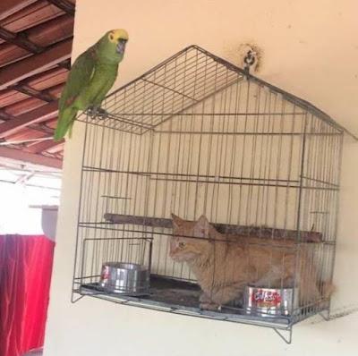 Katze sitzt im Käfig des Kanarienvogels witzig