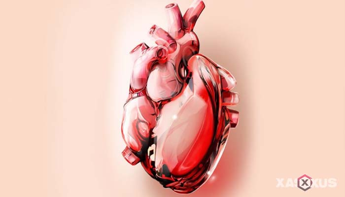 Fakta 2 - Jantung janin 5 minggu mulai terbentuk