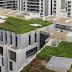 Groene daken voor klimaatbestendigheid