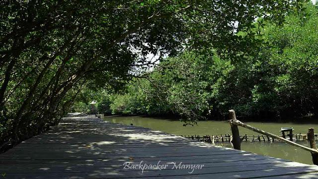 Menyususri Hutan Mangrove Bali