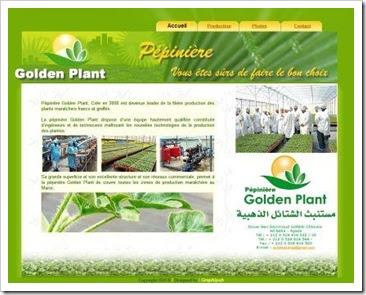 Pépinière Golden Plant