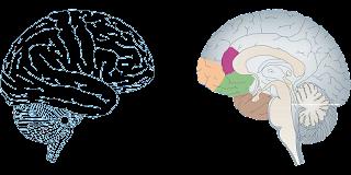 Thần kinh học