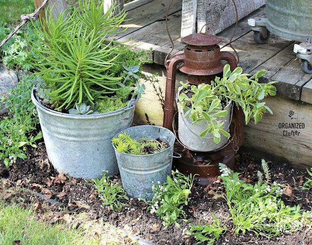 Rusty Lantern Succulent Planter