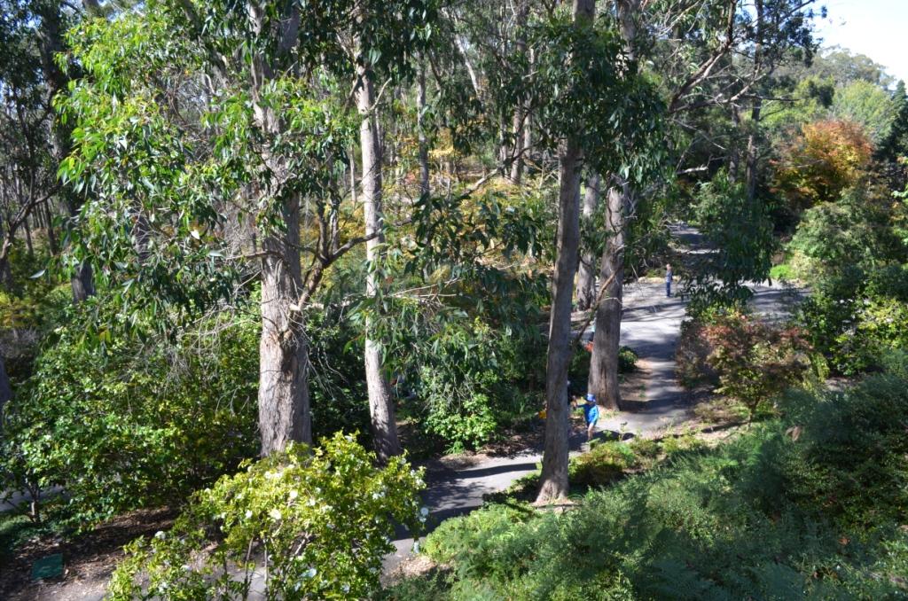 Lupey Loops Mount Lofty Botanic Garden