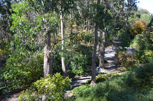 Looking down from a higher vantage point, one can see a windng narrow path with a few walkers below. The path weaves its way between native trees and shrubs under dappled sunlight.