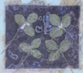 Wet cyanotype_Sue Reno_Image 233