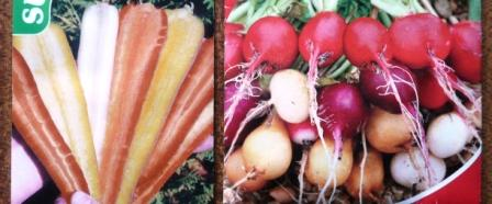 Rainbow Carrots F1 from the HenSafe Smallholding