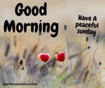 good morning wishes sunday
