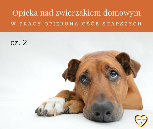 Opieka nad zwierzakiem domowym w pracy opiekuna osób starszych - cz. 2 ZDANIA