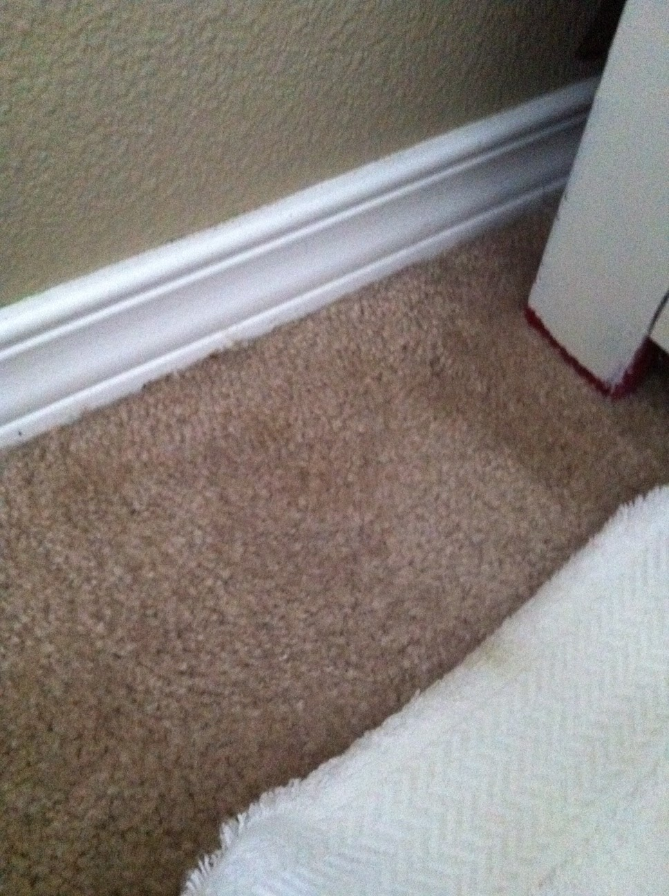 Freckle Face Girl: Tips for living: Carpet Cleaning